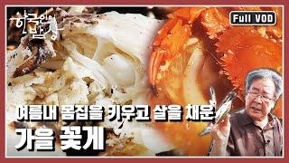 [한국인의밥상★풀버전] 가을의 문턱. 바다의 기운을 옹…