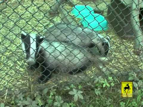 Presentazione Centro di Recupero Animali Selvatici (Parte 2)