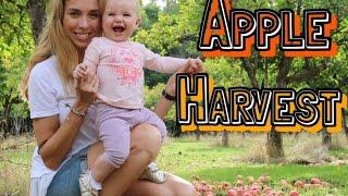 APPLE HARVEST PARTY | Как мы собирали яблоки и сами делали ЯБЛОЧНЫЙ СОК(, 2016-11-24T10:17:31.000Z)