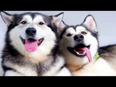 Top 5 giống chó dễ thương nhất thế giới