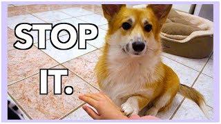 Mildly Annoying My Dog.