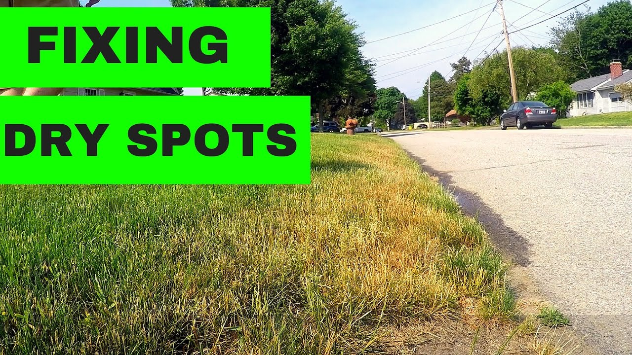 How To Fix Dry Spots In Your Lawn Youtube