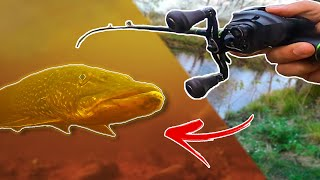 Fishing Small RIVER While Baitfish is Spawning HUNGRY PIKE Team Galant