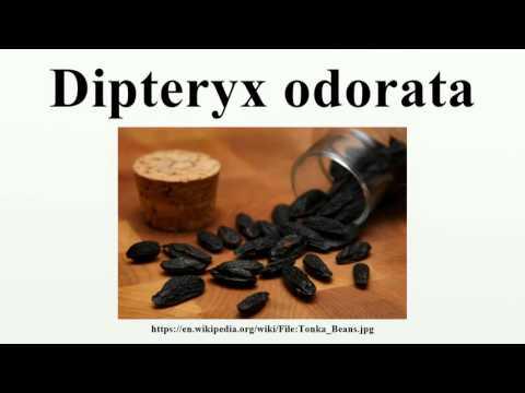 Dipteryx odorata