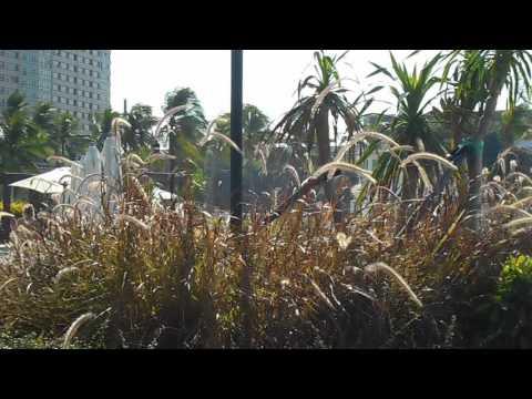 ПАТТАЙЯ Тайланд Городской портал Pattaya отзывы, фото