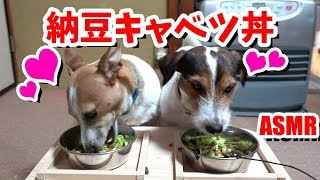 家庭菜園で採れた、極甘キャベツさとうくんと 納豆で納豆キャベツ丼を作...