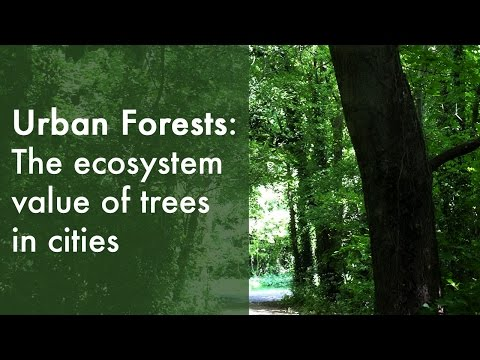 Mapping Dublin's tree canopy | Dr Gerald Mills (2015)