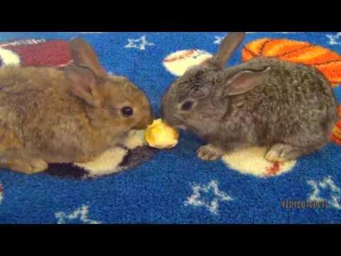 Baby Bunnies Eating Bananas