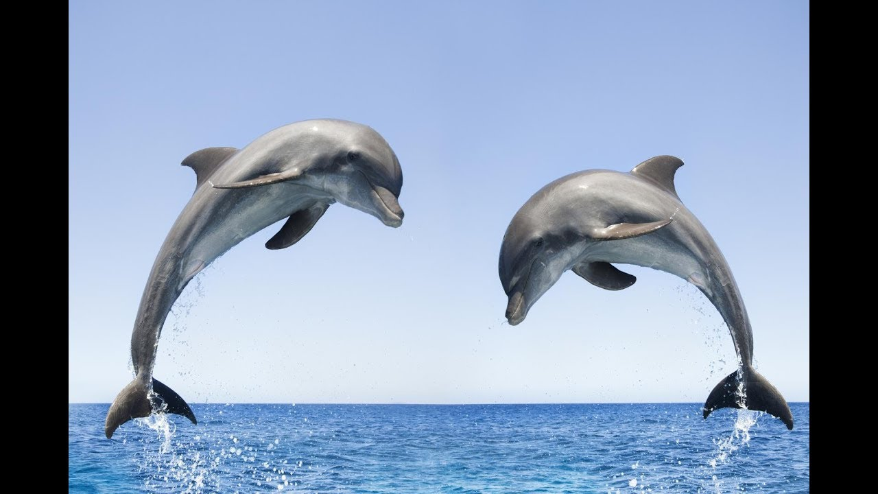 Dolphin Sounds Effects / Sounds of Dolphins - YouTube