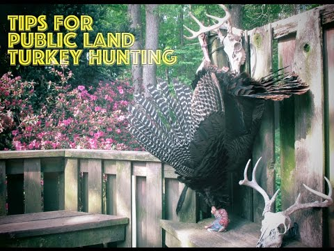Tips For Public Land Turkey Hunting