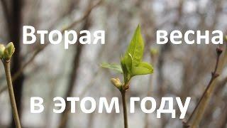 Верба или ель? Весна в Москве в конце декабря 2015 года
