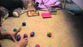 Pokemon Contest Egg Scramble