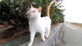 茶白猫がモフられにきた
