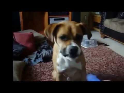 Забавные кадры с животными