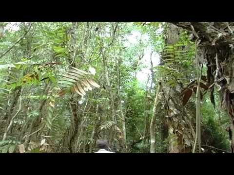 Mật ong Hoa Tràm rừng U Minh - Cà Mau
