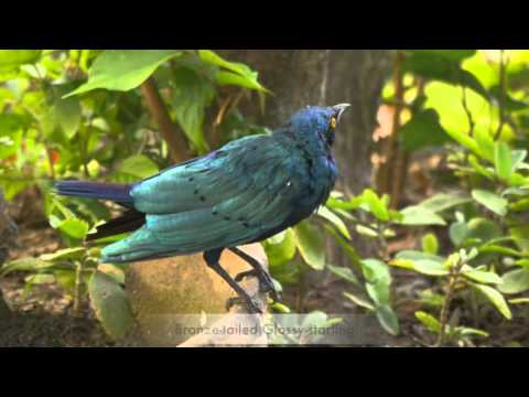 Birdlife Africa - bird tours in The Gambia