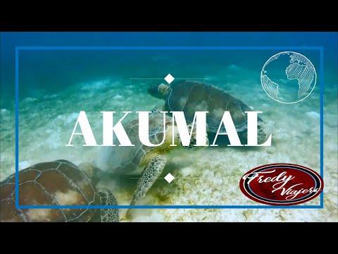AKUMAL |  México | Cómo nadar con las tortugas marinas GRATIS