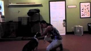 Dog Training: Wilma From Memphis,tn