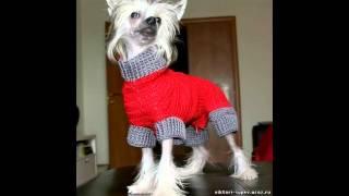 магазин одежды для собак недорого
