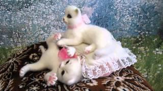 Валяние Белые котята