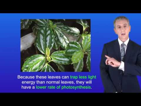 GCSE Science Biology (9-1) Photosynthesis