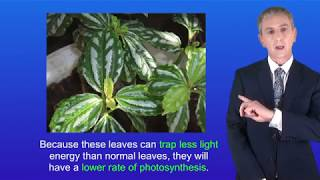 GCSE Science Biology (9-1) Photosynthesis