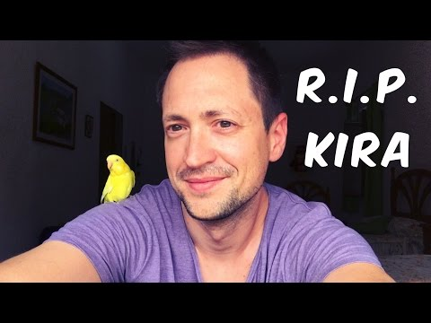 My Budgie Kira's Last Days