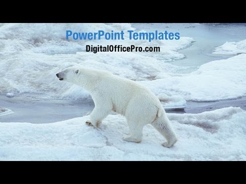 Polar Bear in Snow PowerPoint Template Backgrounds ...
