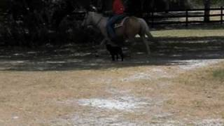 Dog Training Horse Training Southwest K9 Academy
