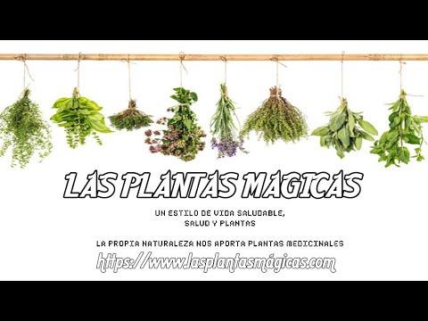 EL PODER DE LAS PLANTAS MAGICAS VideoSpot