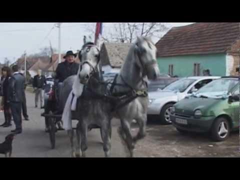 Pedjina svadba  Zarkovac