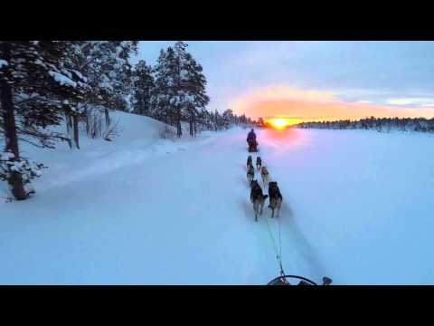 Dog sledding and aurora- Northern Lights on the Finnmark plateau