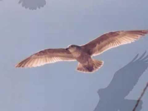 Uçun Kuşlar- Rıza Tevfik, Seslendiren: Serdar Tuncer Şiir