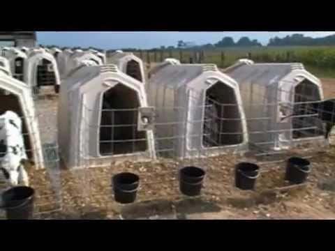 Calf-Tel Hutches 2012 - YouTube