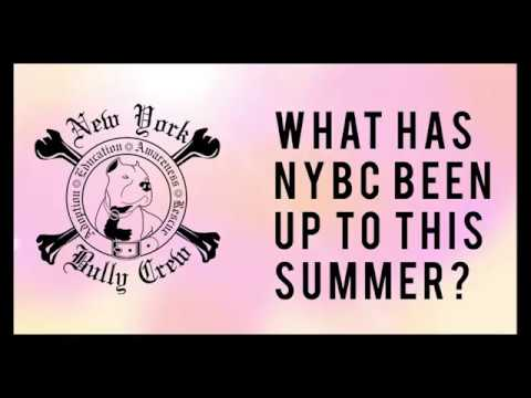 New York Bully Crew | Summer of Dog Rescues