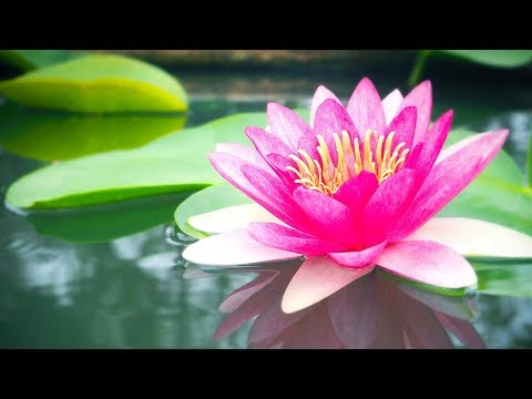 Relaxing  Reiki Healing  Zen  Meditation Healing Calm  Yoga Sleep☯1928