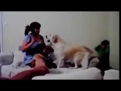 dog saving kid. Pets Playhouse Kennel, Mumbai
