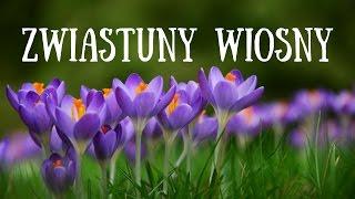 Zwiastuny Wiosny Rozpoznajemy Wiosenne Kwiaty Wiosna Antonio Vivaldi Lekcja Dla Dzieci Youtube