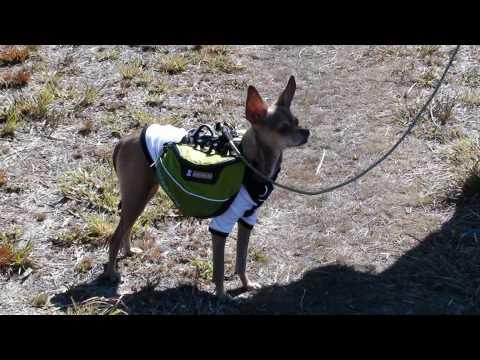 Hiking Chihuahua