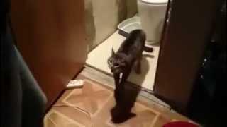 Пусти в туалет!! Кот - охранник туалета! Ржач) ohr...