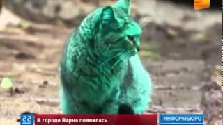 В Болгарии появилась кошка... зеленого цвета
