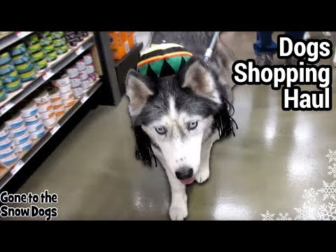 husky-goes-shopping-|-dogs-go-shopping-at-pet-supplies-plus