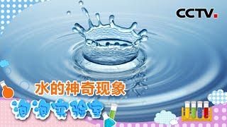 [智慧树]泡泡实验室:水的神奇现象|CCTV少儿