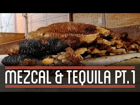 Mezcal (1/3) | How to Brew Everything: Mezcal and Tequila