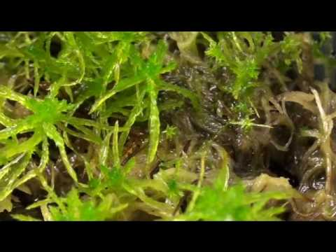 How To Grow Sphagnum Moss Before And After Part 3 Of 3 Youtube
