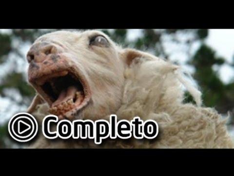 BLACK SHEEP Film Completo | BLACK SHEEP Film Completo In Italiano