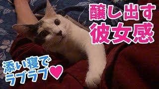 添い寝で彼女感を出してくる猫が可愛すぎた…!【尊い】
