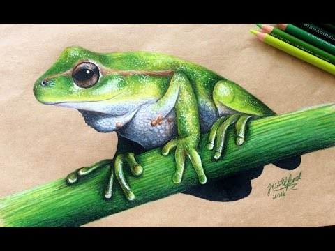 Realistic Tree Frog Drawings SPEED DRAWING: ...