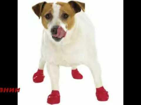 Лучшая одежда для крупных собак в интернет магазине hot4dog. Ru | купить недорого, любые размеры одежды для крупных собак.
