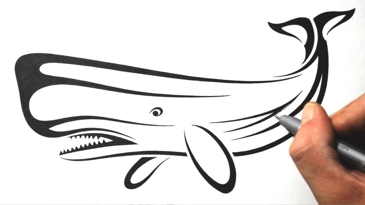 8b1fed364 How to Draw a Whale - Tribal Tattoo Design Style - YouTube